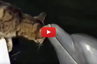 Watch What Happens When These Dolphins Meet A Cat!