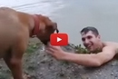 Watch What Happens When This Dog Thinks His Owner Is Drowning!