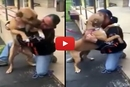Watch What Happens When This Man Is Reunited With His Stolen Dog After 2 Years!