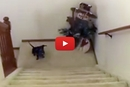 Watch What This Dachshund Does When His Mom Calls!
