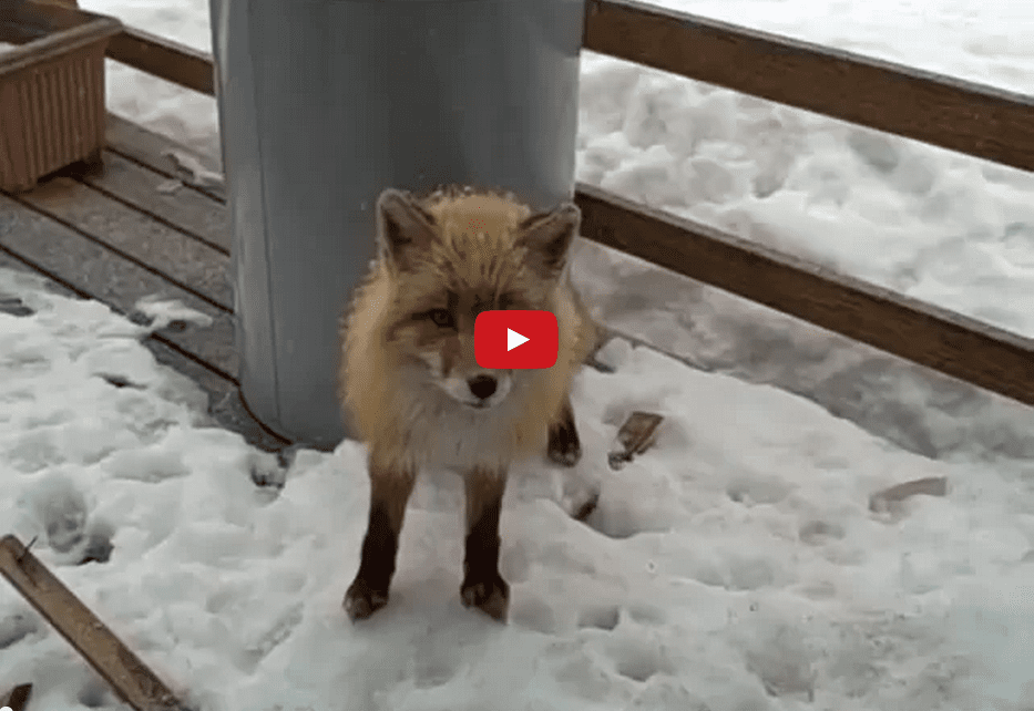 Watch Winter Weather Unite This Eclectic Group of Friends as an Eagle, Fox, and Cat Chill Outside on a Snowy Day!