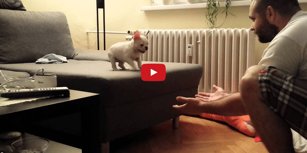 Watching This Tiny Puppy Take a Leap of Faith is Truly Inspiring!!