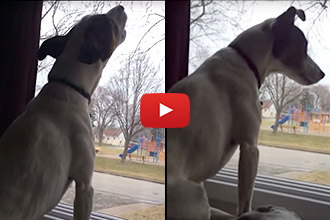 We've Heard Dogs Sing Along With People... But This Is A Whole New Level!