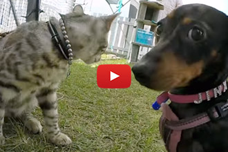 We've Seen Cats Who Like Dogs, But This Cat Loves Them!