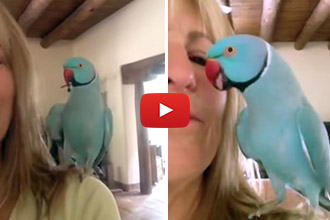 We've Seen Talking Birds, But Nothing Like This! So Amazing!