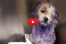 We Couldn't Believe How Heartbreakingly Neglected This Dog Was