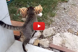 """We Couldn't Believe What This Cat """"Caught"""" In His Neighbor's Yard"""