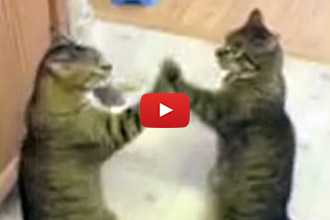We Couldn't Look Away From These Patty-Cake Kitties!
