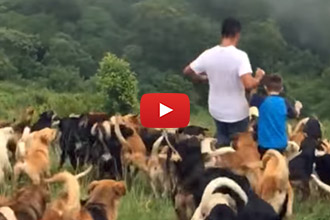We Don't Think We've Ever Seen Anything Quite Like This Dog Sanctuary!