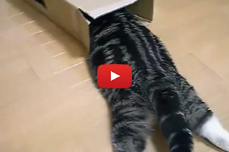 We Don't Think We Have Ever Seen A Cat Have This Much Fun With A Box!