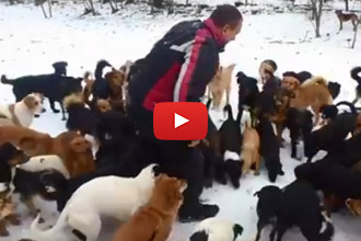 We Love This Dog Rescue, Home To Over 450 Stray Dogs