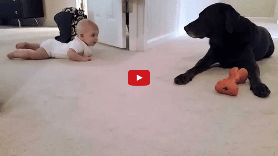 Welcome the New Year with This Baby's First Crawl! The Ending is TOO Cute!!
