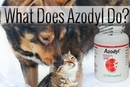 What Does Azodyl Do?