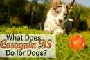 What Does Cosequin DS Do for Dogs?