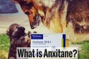 What is Anxitane for Dogs?