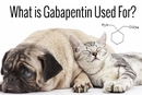 What is Gabapentin Used For?