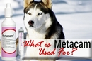 What is Metacam Used For? (And Which Pets Shouldn't Take It)