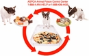 What To Do If Your Pet Digested Toxic Food Or Substance