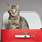What To Do With Your Pet When You Travel