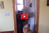 When His Owner Wants A Kiss, We Couldn't Believe What Lucy Did!