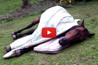 When it's This Horse's Bedtime, He Knows Just How to Get Comfortable