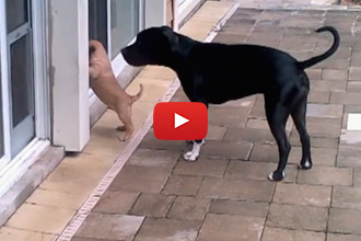 When The Puppy Can't Get Inside The House, Look Who Shows Up To Lend A Helping Paw!