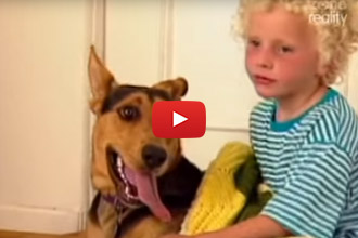 When This Dog Slips Through The Fence, You'll Never Guess What The Outcome Was