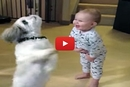 When This Dog Starts Spinning For Treats, Watch What The Baby Does!