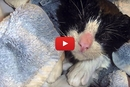When This Kitten Loses His Vision, His Foster Family Does The Unexpected