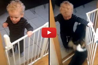 When This Little Boy Opens The Gate, The Corgis Run Out. But Watch What Happens Next!
