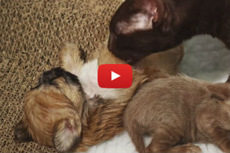 When This Puppy Gets Rejected, He Finds an Unexpected New Mother...