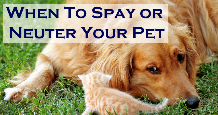 When to Spay or Neuter Your Pet