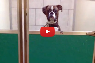 When You Leave Your Dog At Daycare - And He Is Not Happy