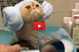 Whoever Said Cats Hate Water, Never Saw This Video!