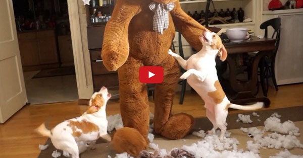 Why Give Your Dog a Toy When You Can BE the Toy? This Pup's Reaction to a Giant Gift is Too Amazing to Miss!!
