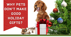 Why Pets Don't Make Good Holiday Gifts