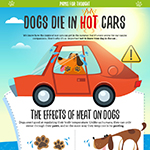 Why You Shouldn't Leave Your Dog In The Hot Car
