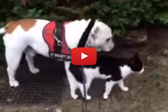 You'll Never Guess Who This Bulldog's New Walking Buddy Is