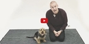 You'll Never Guess How These Dogs React to a Man Barking like a Dog! It's Absolutely <b>HILARIOUS</b>!!