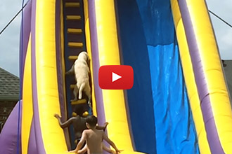 You've Never Seen a Dog Go Down a Big Water Slide... Until Now!