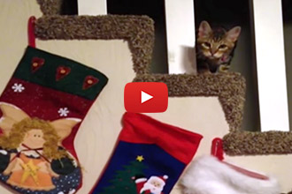 You Wont Believe How This Cat Reacts To Stockings!