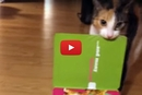 You Wont Believe How This Cat Reacts When This Card Starts Singing