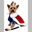 Zack & Zoey Royal Pup Halloween Costume - SMALL