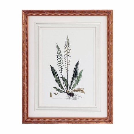 380371 Chelsea House Lithograph Print Gold Frame With French Mat Curtis Ferns III