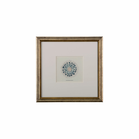 386855 Chelsea House Hand Colored Lithograph Antique Silver Leaf Frame W/8 Ply Mat Sea Organisms I
