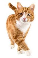 Read the latest news on your cat's health