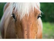Fly Control Products for Horses