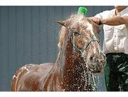 Shampoos/Grooming for Horses
