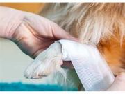 Wound Care/Pain Relief for Dogs