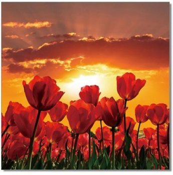 Premium Acrylic Wall Art Flowers in Bloom - SC-9778